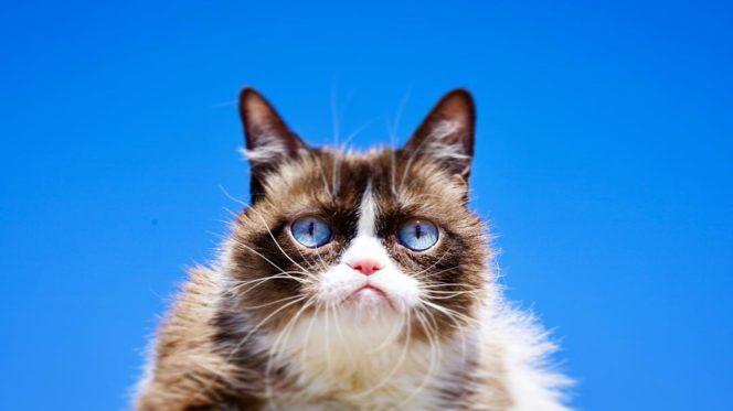 Grumpy Cat, la chatte la plus célèbre d'Internet, est décédée.